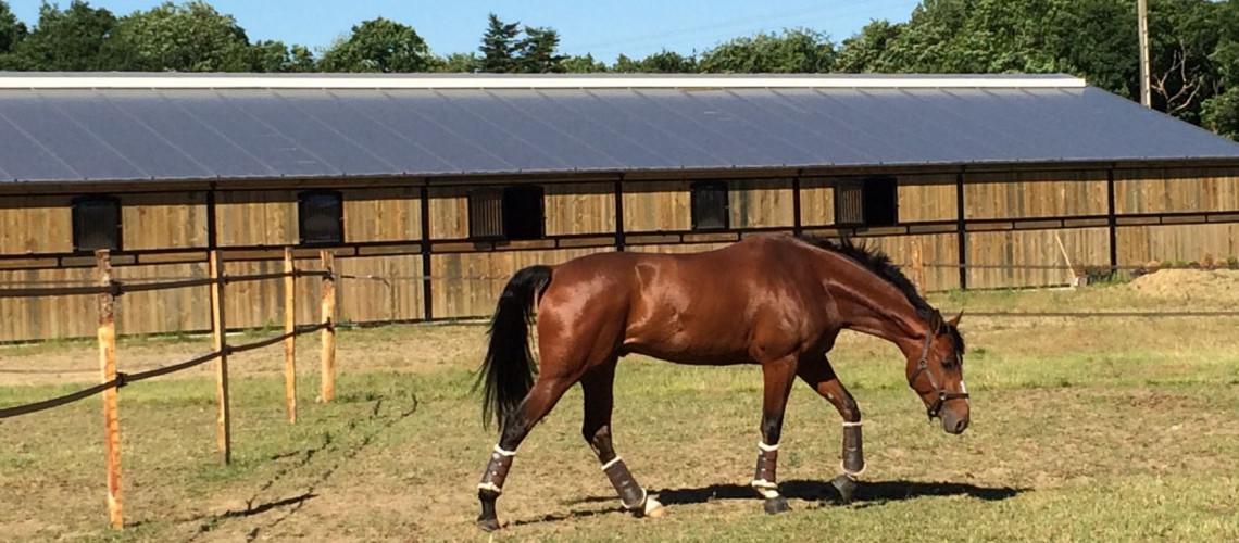 De nombreux paddocks pour le bien être des chevaux.