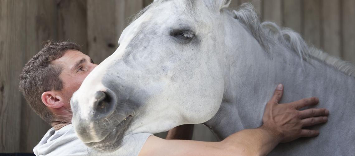 Des installations pour le confort des cavaliers